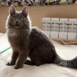 Котик Тёмочка, Новосибирск