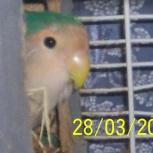 Приму в дар любого попугая, Новосибирск