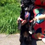 В Первомайском районе потерялась маленькая собачка, Новосибирск