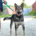 Собачка Вафелька ищет дом, Новосибирск