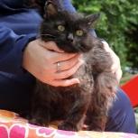 Ищет дом подобрашка, трогательный черный кот Арсений!, Новосибирск