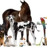 Ветеринарные услуги, Новосибирск
