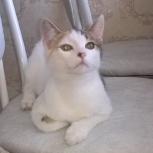 Кошечка Белка тарахтелка в добрые руки, Новосибирск