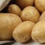Продам отборный картофель, Новосибирск