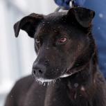 Хрупкая и очень ласковая собачка-подросток Линда ищет дом!, Новосибирск