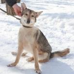 Пес Сева в заботливые руки, Новосибирск