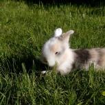 Продам декоративных кроликов с клеткой!, Новосибирск