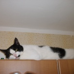 Позитивный котик, Новосибирск