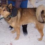 Пёс Малыш самый верный друг, Новосибирск