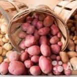 Продам картофель оптом, Новосибирск