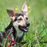Милочка - озорная активная собачка небольшого размера!, Новосибирск