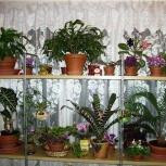 Домашняя передержка и уход за растениями, Новосибирск