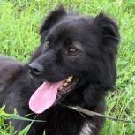 Черныш - трехлапый пес в дар, Новосибирск