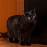 Кошка Алиса из страны чудес, Новосибирск