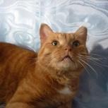 Рыжик,кот который умеет разговаривать, Новосибирск