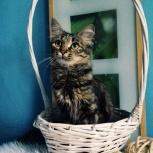 Отличная молоденькая кошка-мышеловка!, Новосибирск