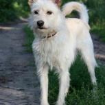 Красавчик пес Тарзан ищет дом, Новосибирск