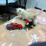Отдам котенка в добрые руки, Новосибирск