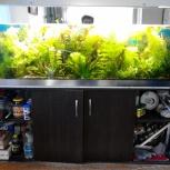 Продам  аквариум 500 литров, Новосибирск