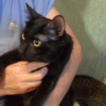 Черный кот Моня (кастрат) 1 год, Новосибирск