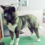 Стрижка и тримминг собак средних размеров, Новосибирск