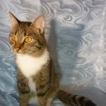 Котик инвалид Мускат, Новосибирск