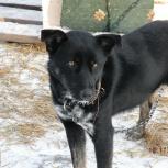 Собачка Черри в добрые руки, Новосибирск