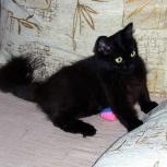 Подрощенный котенок Маруся в добрые руки, Новосибирск