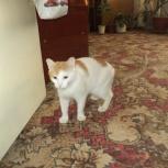 Кот – зимнее солнышко, Новосибирск