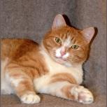 Шикарный кот Лексус, Новосибирск