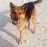 Особенная собачка ищет дом, Новосибирск