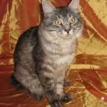 Потерялся кот на ОбьГЭСе (хвост помпончиком), Новосибирск