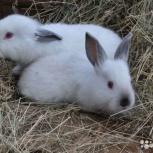 Кролики, Новосибирск