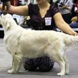 Профессиональная стрижка собак, Новосибирск