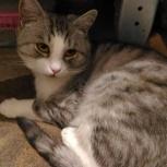 Найден кот- недоросль, мож кто узнает или возьмет в семью, Новосибирск