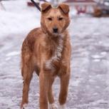 Собачка Лава в добрые руки, Новосибирск