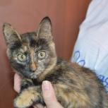 Очень красивая котенок-девочка, Новосибирск