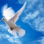 возьму добрый руки разных голубей, Новосибирск