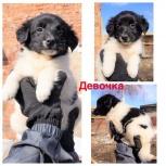 Целых 7 очаровательных щенков! мальчики и девочки! 2 мес., Новосибирск