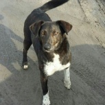Пропал пес в Марусино, может быть где угодно, Новосибирск