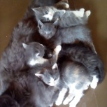 котята бесплатно, Новосибирск