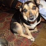 Маленькая собачка Лора надеется и ждёт, Новосибирск