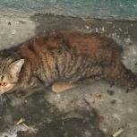 Найдена кошка или кот, Новосибирск