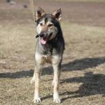 Молодая и позитивная собачка ищет семью, Новосибирск