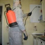 Дезинсекция. Уничтожение тараканов радикальной химией, Новосибирск
