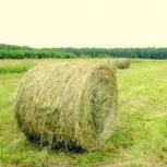 продам сено в рулонах, Новосибирск
