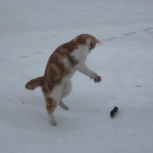 Пропал кот, Новосибирск