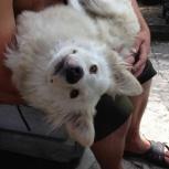 Добрейшая собачка в добрые ручки, Новосибирск