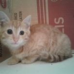 Слепой котенок Коржик  3 месяца, Новосибирск