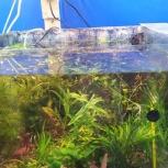 Аквариумные растения живые большое поступление, Новосибирск